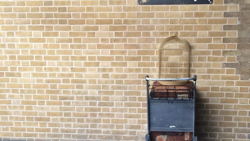 Transvastaisuutta Tylypahkassa – mistä Rowlingin transvastaisuudessa on kyse?